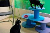 Gatos: área de lazer feita com carretéis de fios