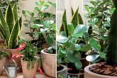 Um jardim feito com plantas resistentes de pouca manutenção